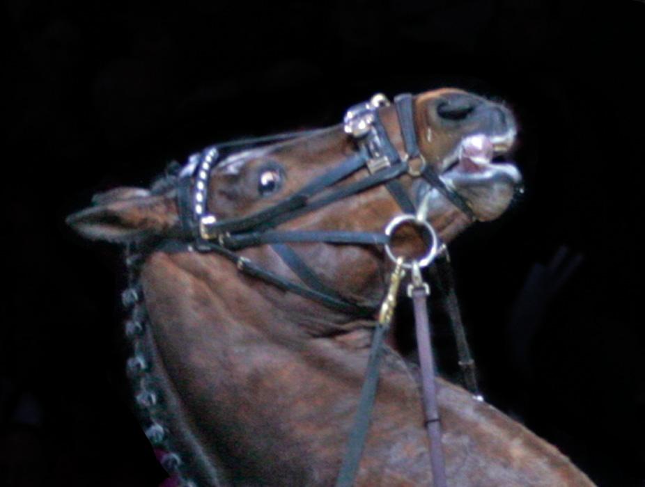 Pelkäävä hevonen, joka tuntee kipua