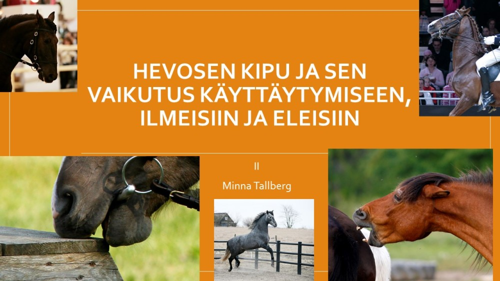 Hevosen kipukaytos_2