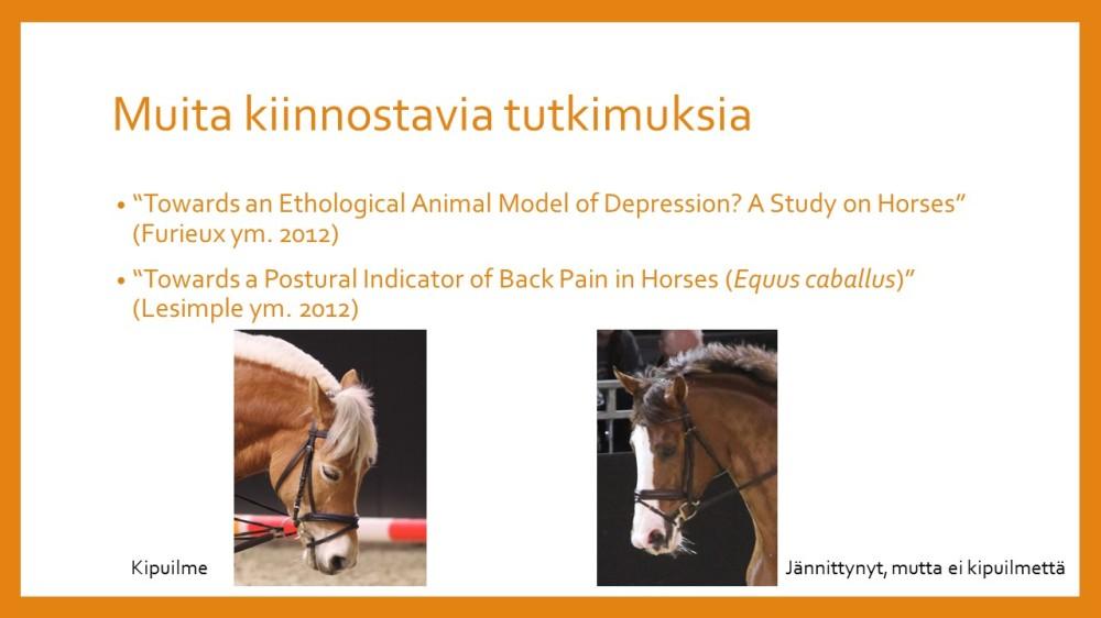 Hevosen kipukaytos_2_c