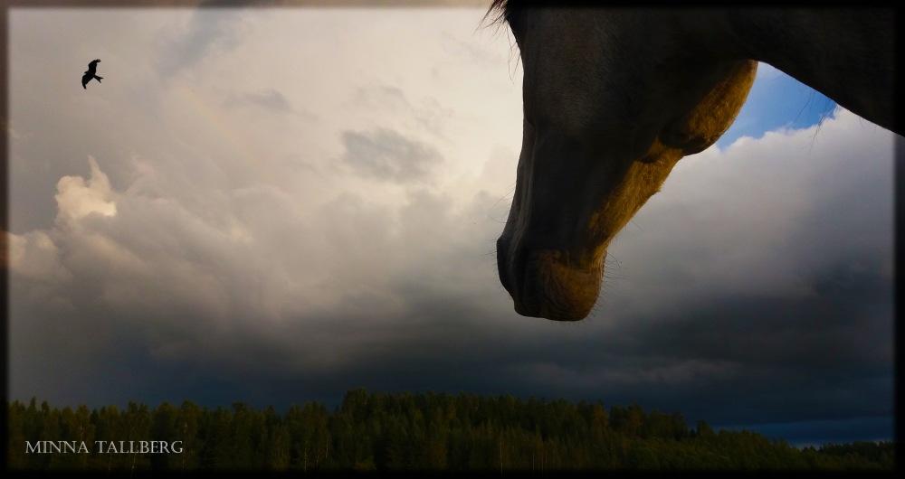 eagles_horses