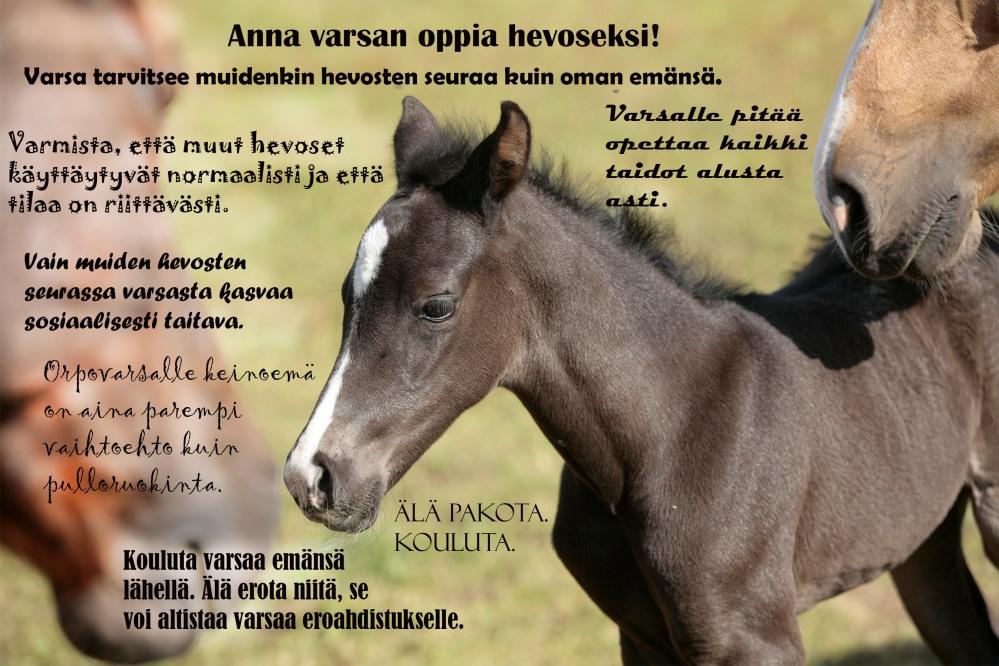 varsa_sosiaalinen
