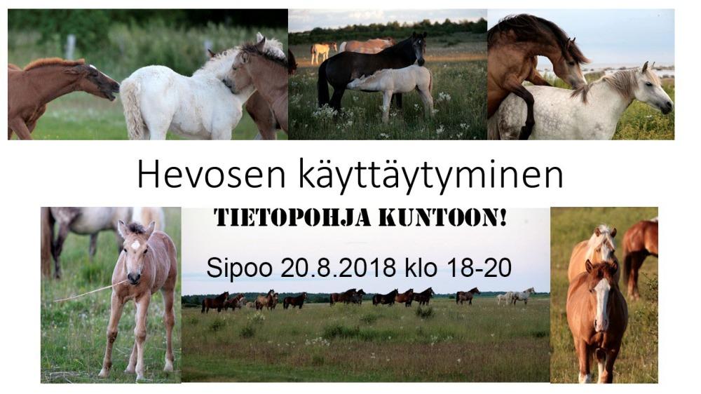 hevosen_kayttaytyminen